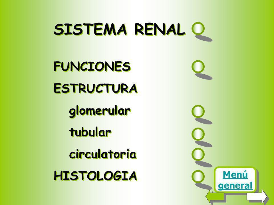 SISTEMA RENAL FUNCIONES ESTRUCTURA glomerular tubular circulatoria HISTOLOGIA SISTEMA RENAL FUNCIONES ESTRUCTURA glomerular tubular circulatoria HISTOLOGIA Menú general Menú general