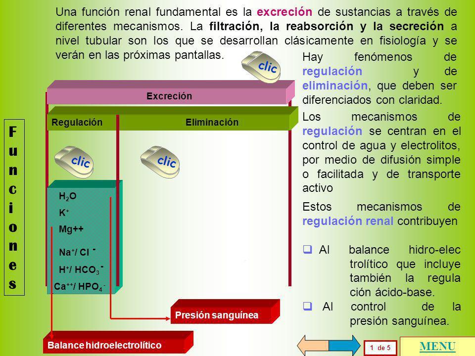 FuncionesFunciones 1 de 5 MENU Regulación Eliminación H 2 O K + Mg++ Na + / Cl - H + / HCO 3 - Ca ++ / HPO 4 - - Excreción Balance hidroelectrolítico Presión sanguínea clic Una función renal fundamental es la excreción de sustancias a través de diferentes mecanismos.