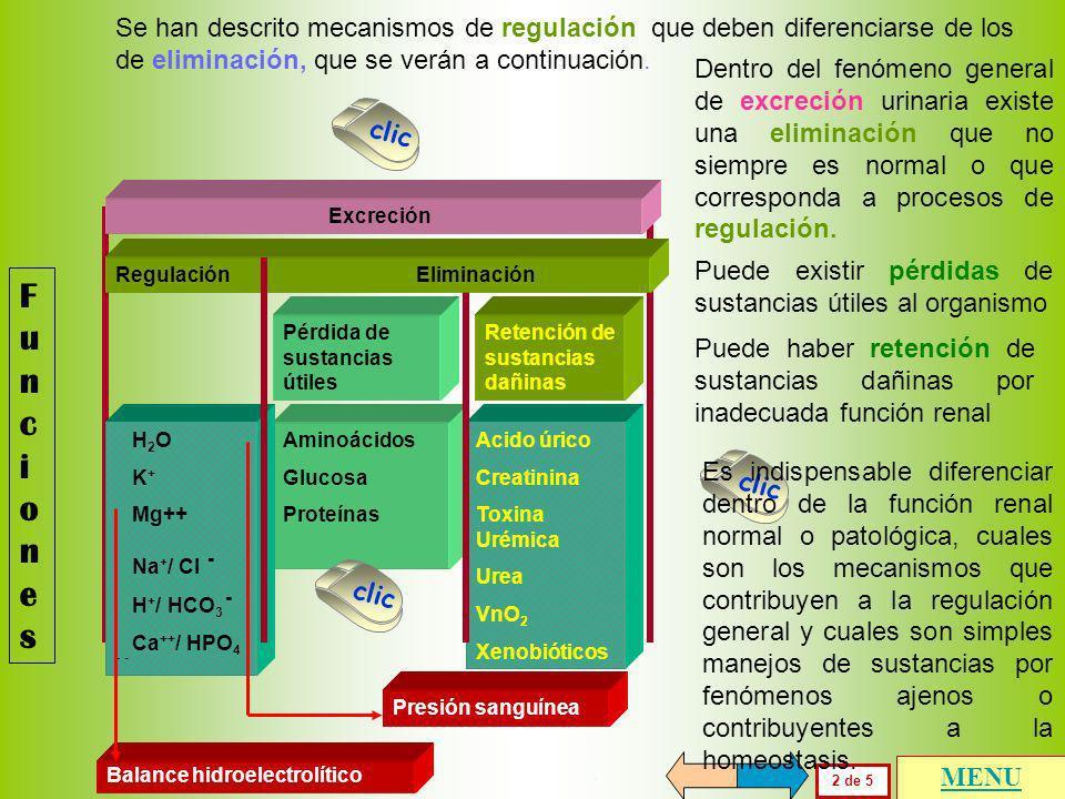 FuncionesFunciones 2 de 5 Pérdida de sustancias útiles Retención de sustancias dañinas Aminoácidos Glucosa Proteínas Acido úrico Creatinina Toxina Urémica Urea VnO 2 Xenobióticos Regulación Eliminación H 2 O K + Mg++ Na + / Cl - H + / HCO 3 - Ca ++ / HPO 4 - - Excreción Balance hidroelectrolítico Presión sanguínea clic Se han descrito mecanismos de regulación que deben diferenciarse de los de eliminación, que se verán a continuación.