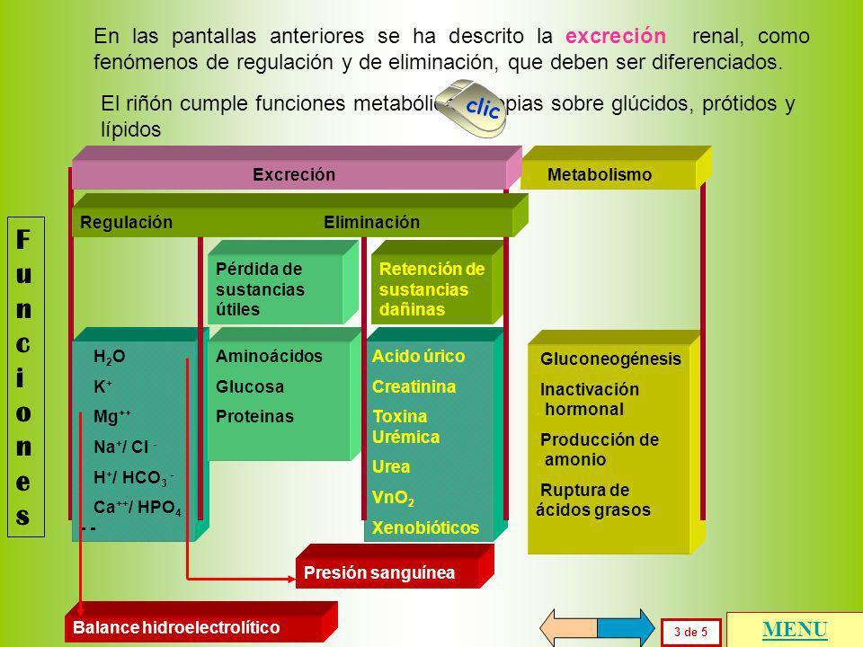 FuncionesFunciones 2 de 5 Pérdida de sustancias útiles Retención de sustancias dañinas Aminoácidos Glucosa Proteínas Acido úrico Creatinina Toxina Uré