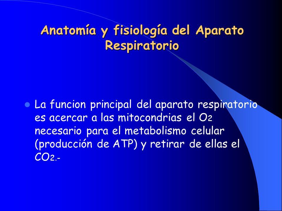 Anatomía y fisiología del Aparato Respiratorio La funcion principal del aparato respiratorio es acercar a las mitocondrias el O 2 necesario para el metabolismo celular (producción de ATP) y retirar de ellas el CO 2.-