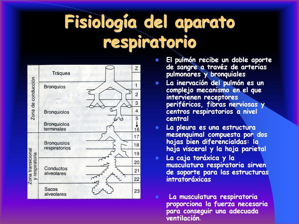 Fisiología del aparato respiratorio El pulmón recibe un doble aporte de sangre a travéz de arterias pulmonares y bronquiales La inervación del pulmón es un complejo mecanismo en el que intervienen receptores periféricos, fibras nerviosas y centros respiratorios a nivel central La pleura es una estructura mesenquimal compuesta por dos hojas bien diferencialdas: la hoja visceral y la hoja parietal La caja toráxica y la musculatura respiratoria sirven de soporte para las estructuras intratoráxicas La musculatura respiratoria proporciona la fuerza necesaria para conseguir una adecuada ventilación.
