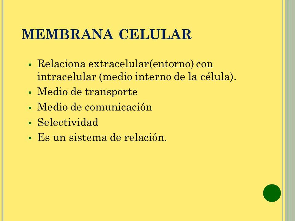 MEMBRANA CELULAR Relaciona extracelular(entorno) con intracelular (medio interno de la célula). Medio de transporte Medio de comunicación Selectividad