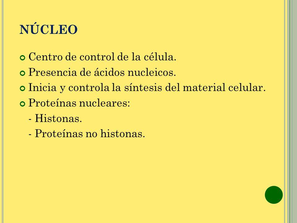 NÚCLEO Centro de control de la célula. Presencia de ácidos nucleicos. Inicia y controla la síntesis del material celular. Proteínas nucleares: - Histo