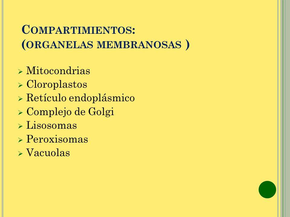 C OMPARTIMIENTOS : ( ORGANELAS MEMBRANOSAS ) Mitocondrias Cloroplastos Retículo endoplásmico Complejo de Golgi Lisosomas Peroxisomas Vacuolas