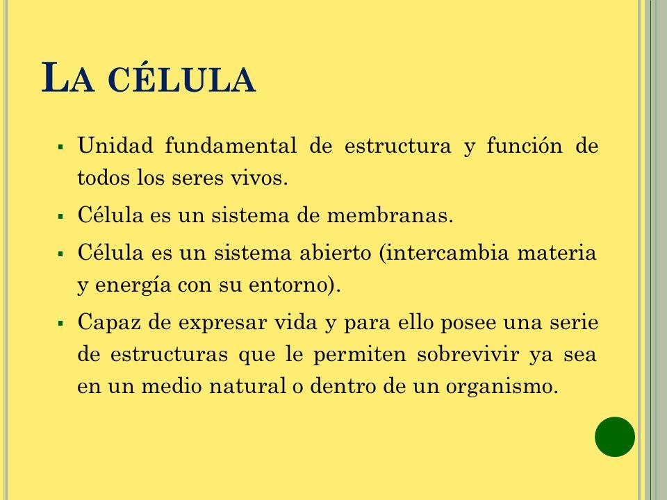 L A CÉLULA Unidad fundamental de estructura y función de todos los seres vivos. Célula es un sistema de membranas. Célula es un sistema abierto (inter