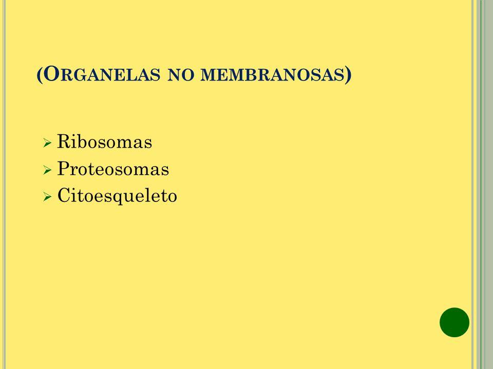 ( O RGANELAS NO MEMBRANOSAS ) Ribosomas Proteosomas Citoesqueleto
