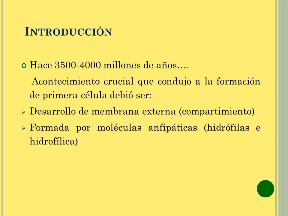 I NTRODUCCIÓN Hace 3500-4000 millones de años…. Acontecimiento crucial que condujo a la formación de primera célula debió ser: Desarrollo de membrana