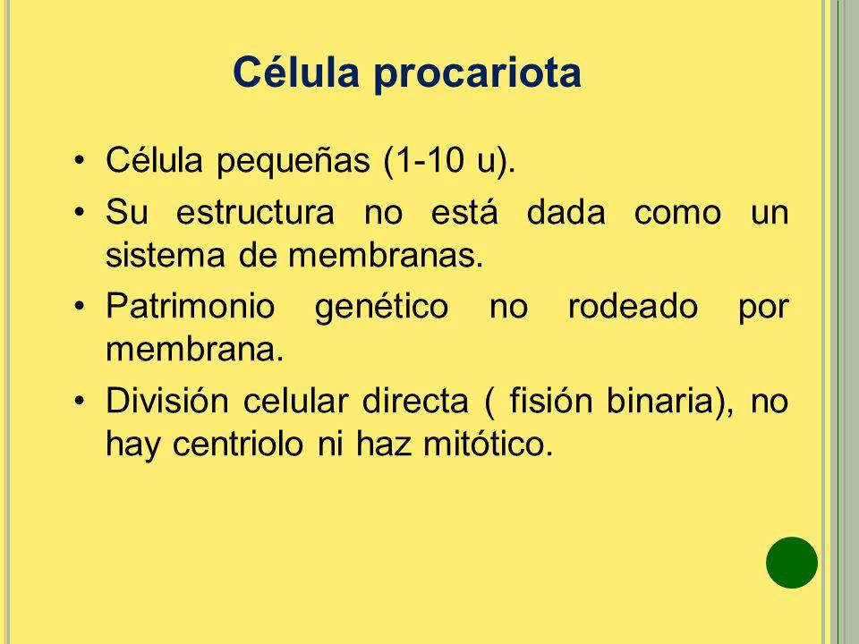 Célula pequeñas (1-10 u). Su estructura no está dada como un sistema de membranas. Patrimonio genético no rodeado por membrana. División celular direc
