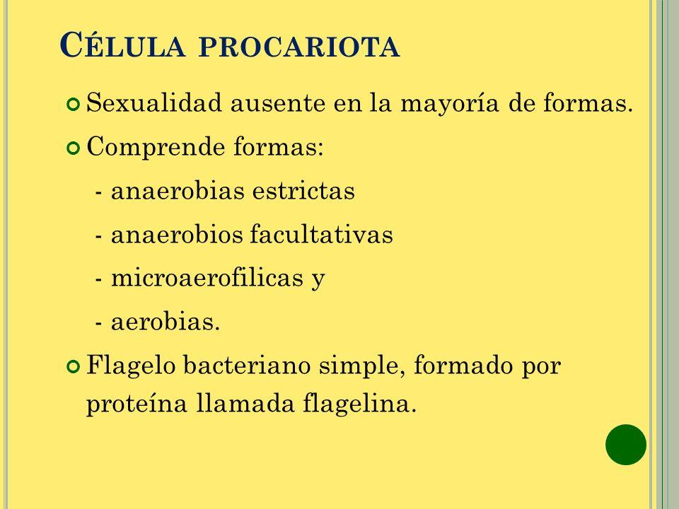 C ÉLULA PROCARIOTA Sexualidad ausente en la mayoría de formas. Comprende formas: - anaerobias estrictas - anaerobios facultativas - microaerofilicas y
