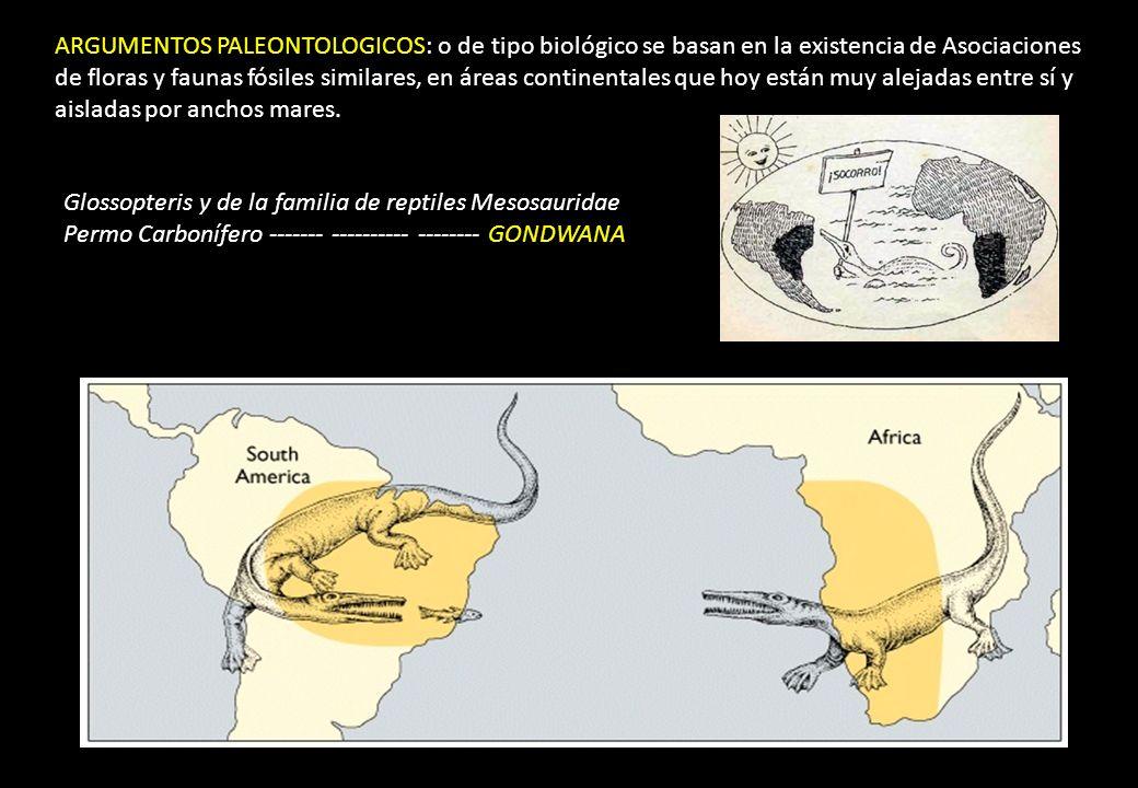 ARGUMENTOS PALEONTOLOGICOS: o de tipo biológico se basan en la existencia de Asociaciones de floras y faunas fósiles similares, en áreas continentales