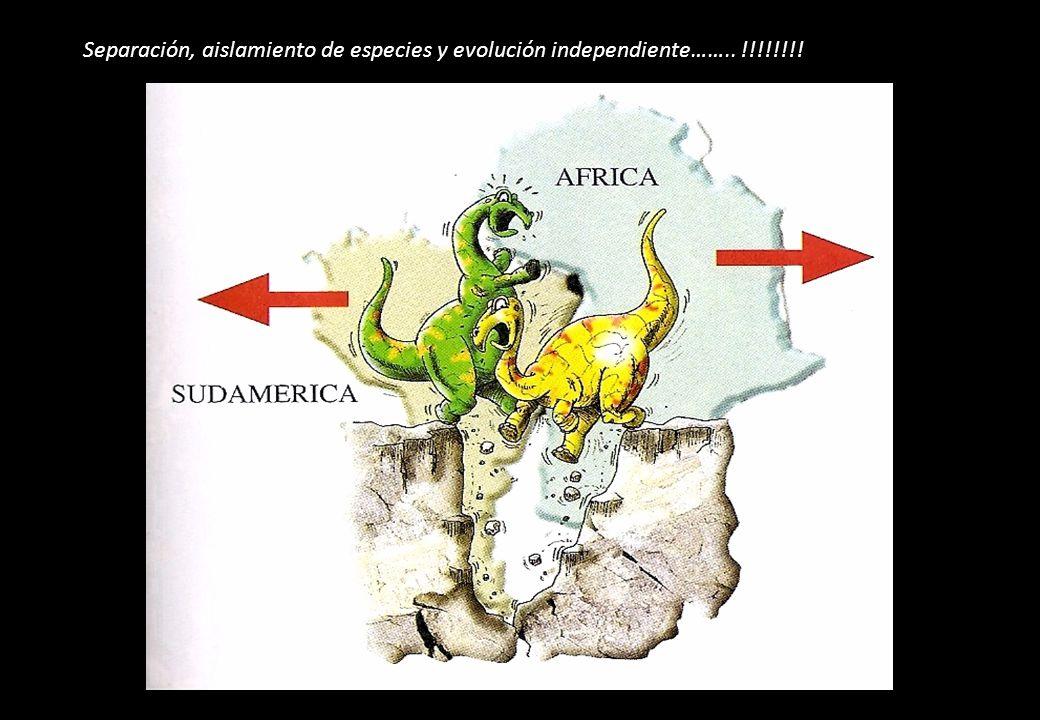Separación, aislamiento de especies y evolución independiente…….. !!!!!!!!