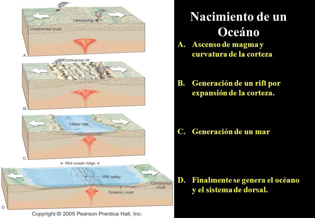 Nacimiento de un Oceáno A.Ascenso de magma y curvatura de la corteza B.Generación de un rift por expansión de la corteza. C.Generación de un mar D.Fin
