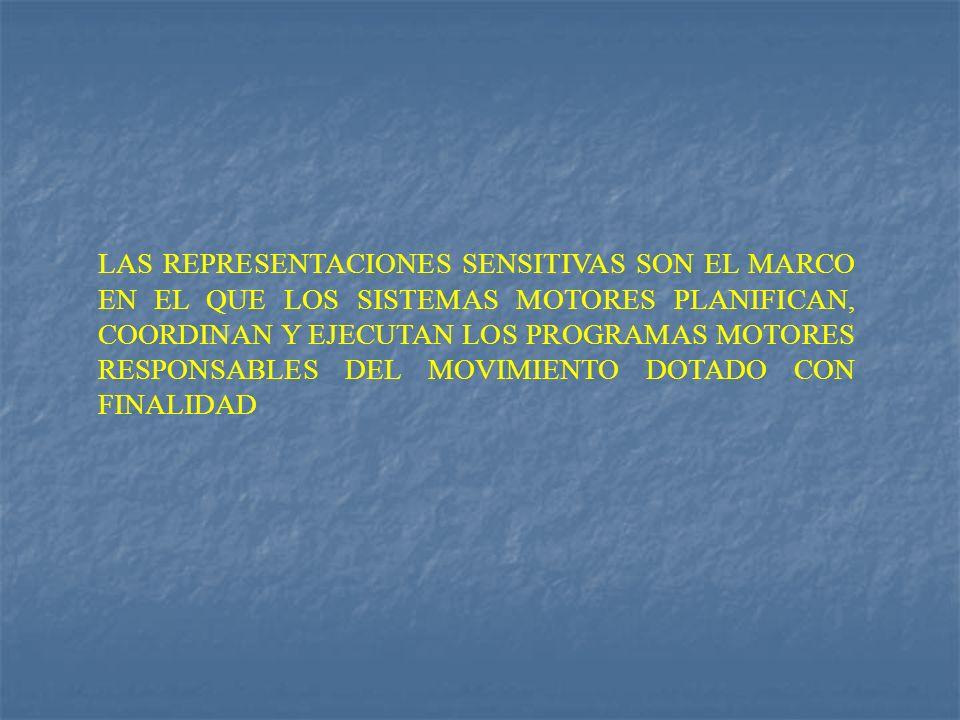 LAS REPRESENTACIONES SENSITIVAS SON EL MARCO EN EL QUE LOS SISTEMAS MOTORES PLANIFICAN, COORDINAN Y EJECUTAN LOS PROGRAMAS MOTORES RESPONSABLES DEL MO