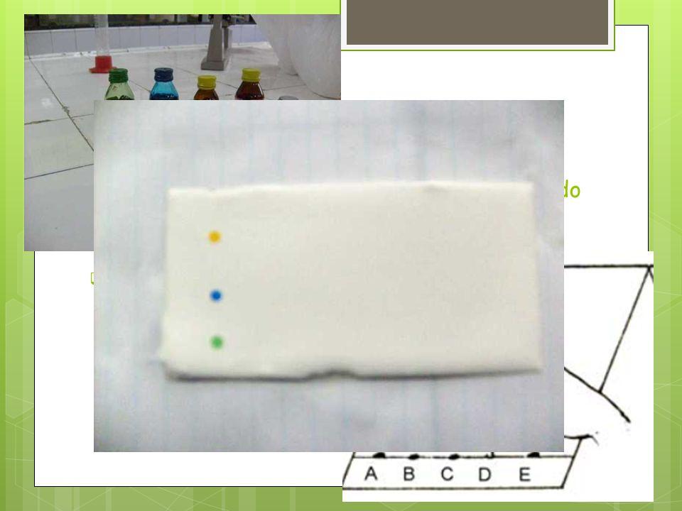 SIEMBRA Trazar una línea de siembra con lápiz, a 1,5 cm del borde. Marcar puntos de siembra a 0,5 cm de los bordes y 1,0 cm entre estos e identificarl