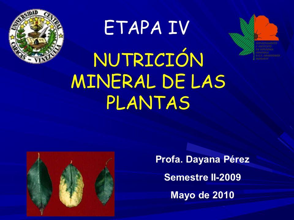 NUTRICIÓN MINERAL DE LAS PLANTAS Profa. Dayana Pérez Semestre II-2009 Mayo de 2010 ETAPA IV