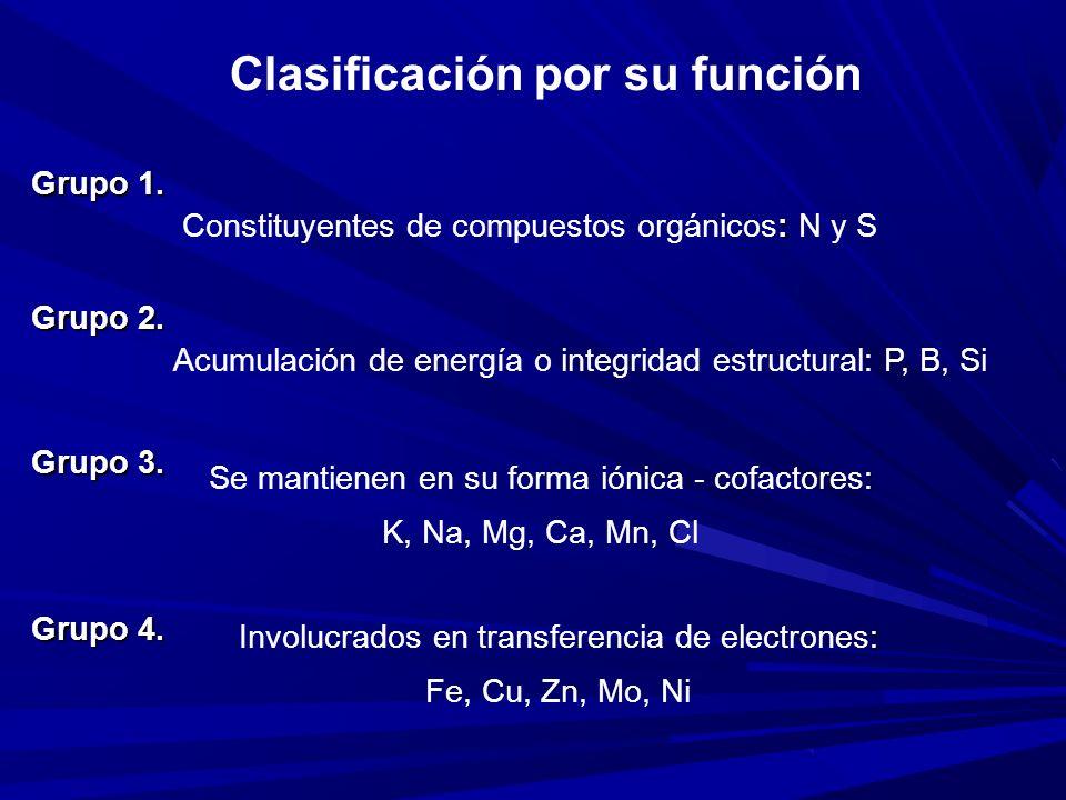 Clasificación por su función Grupo 1.
