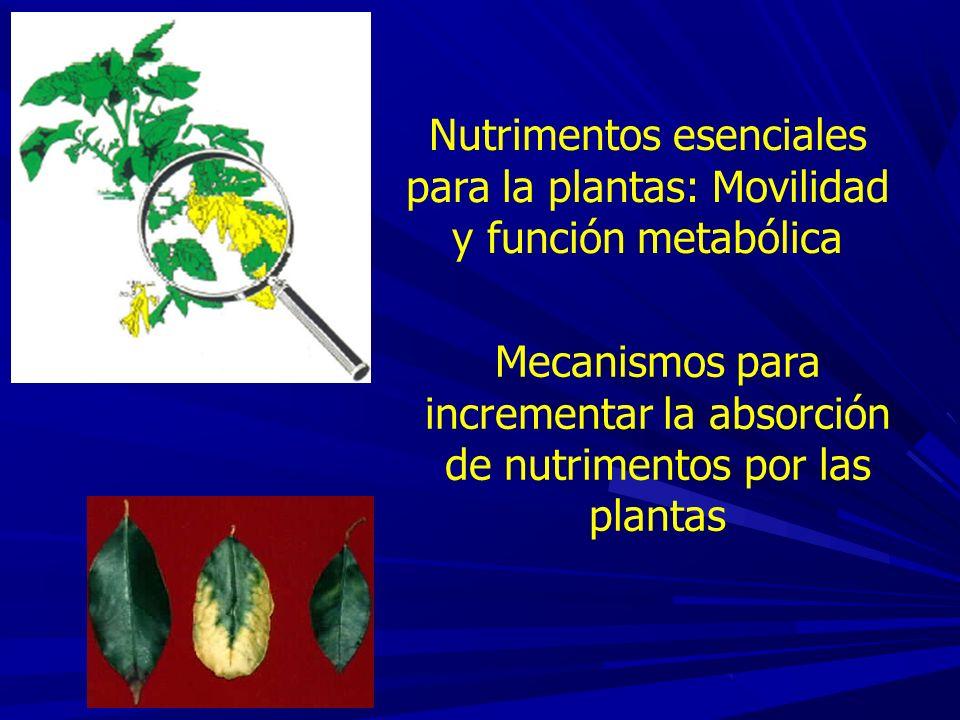 Concentración crítica Concentración de nutriente en el tejido vegetal con la cual se logra óptimo crecimiento.