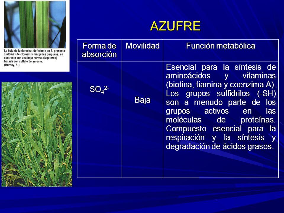 Forma de absorción Movilidad Función metabólica SO 4 2- Baja Esencial para la síntesis de aminoácidos y vitaminas (biotina, tiamina y coenzima A).