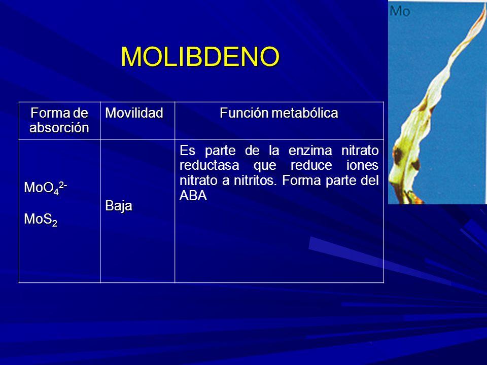 MOLIBDENO Forma de absorción Movilidad Función metabólica MoO 4 2- MoS 2 Baja Es parte de la enzima nitrato reductasa que reduce iones nitrato a nitritos.