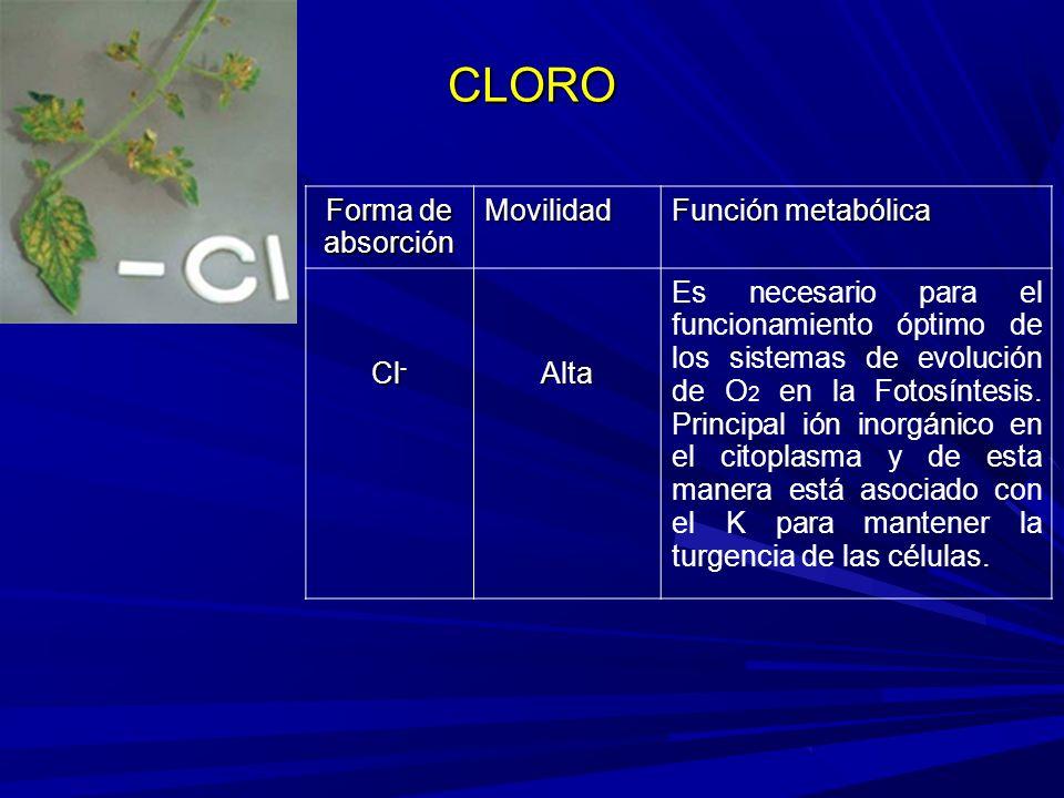 CLORO Forma de absorción Movilidad Función metabólica Cl - Alta Es necesario para el funcionamiento óptimo de los sistemas de evolución de O 2 en la Fotosíntesis.