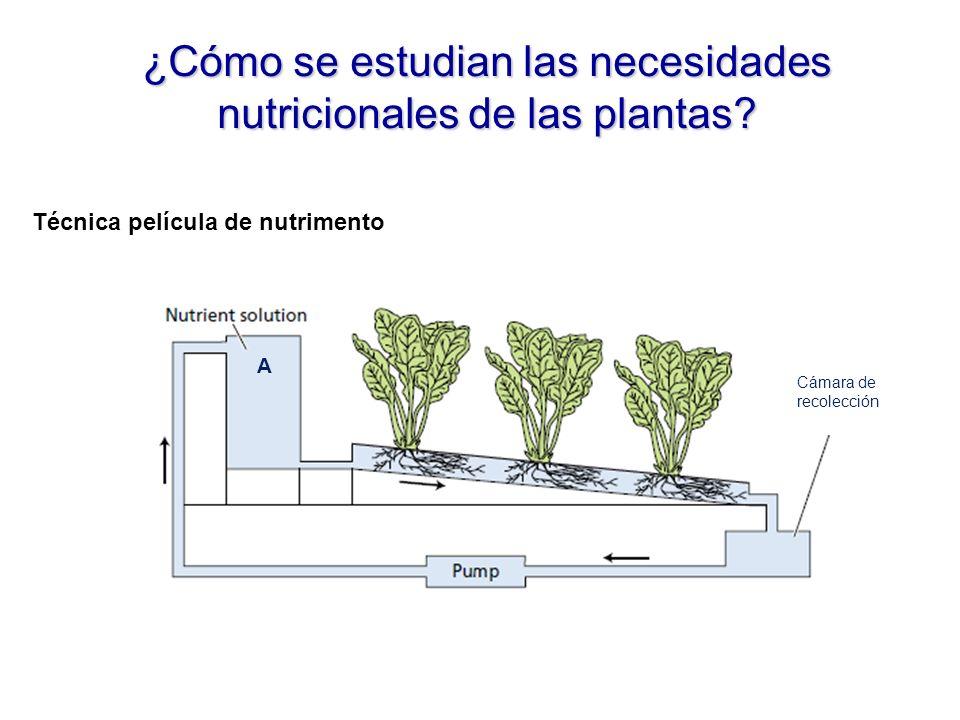 ¿Cómo se estudian las necesidades nutricionales de las plantas.