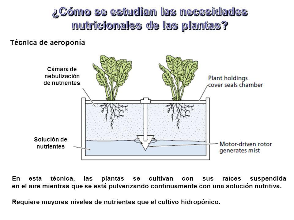 Técnica de aeroponía En esta técnica, las plantas se cultivan con sus raíces suspendida en el aire mientras que se está pulverizando continuamente con una solución nutritiva.