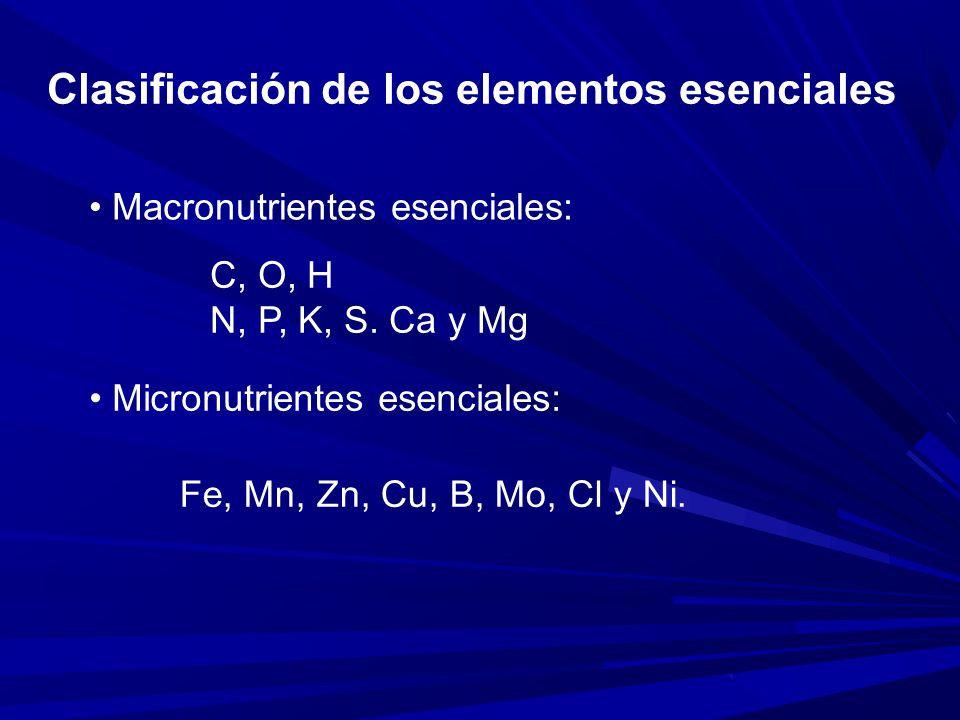 POTASIO Función y presencia en planta: Móvil, presentes en tejidos meristemáticos, células guardianas en estomas.