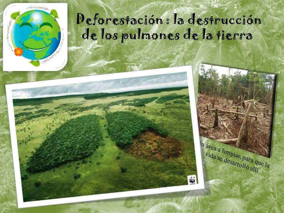 Deforestación : la destrucción de los pulmones de la tierra