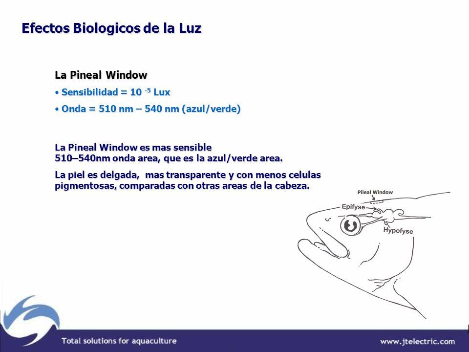 La Pineal Window Sensibilidad = 10 -5 Lux Sensibilidad = 10 -5 Lux Onda = 510 nm – 540 nm (azul/verde) Onda = 510 nm – 540 nm (azul/verde) La Pineal W