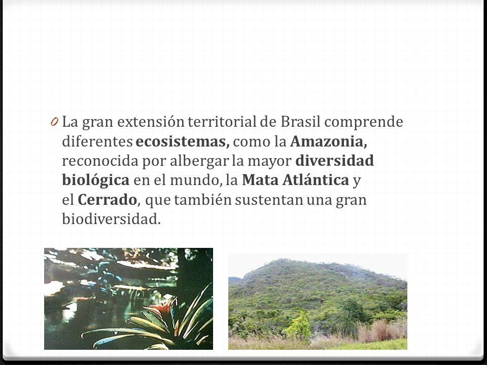 0 La gran extensión territorial de Brasil comprende diferentes ecosistemas, como la Amazonia, reconocida por albergar la mayor diversidad biológica en