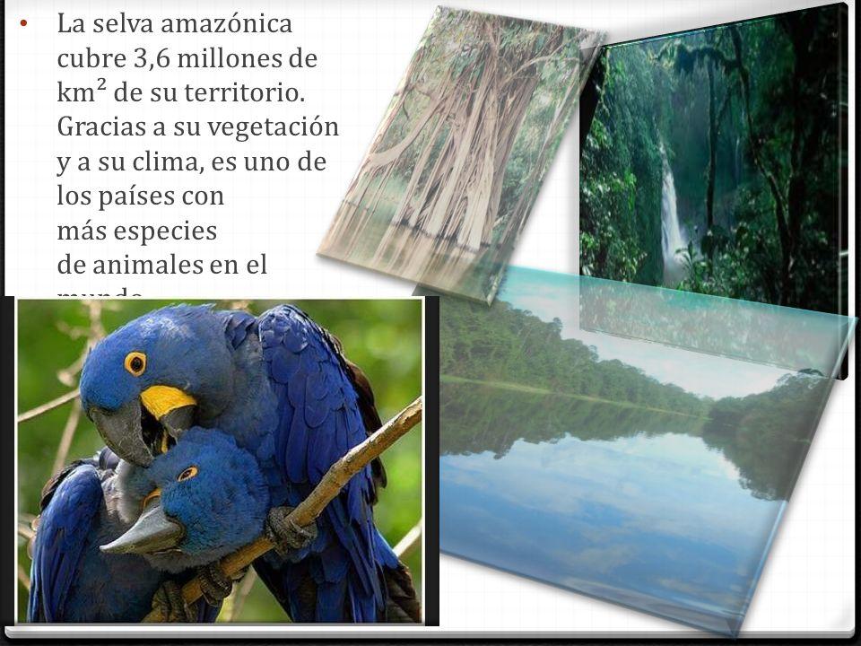 La selva amazónica cubre 3,6 millones de km² de su territorio. Gracias a su vegetación y a su clima, es uno de los países con más especies de animales