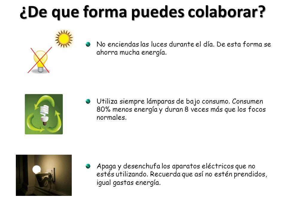 ¿De que forma puedes colaborar? No enciendas las luces durante el día. De esta forma se ahorra mucha energía. Utiliza siempre lámparas de bajo consumo