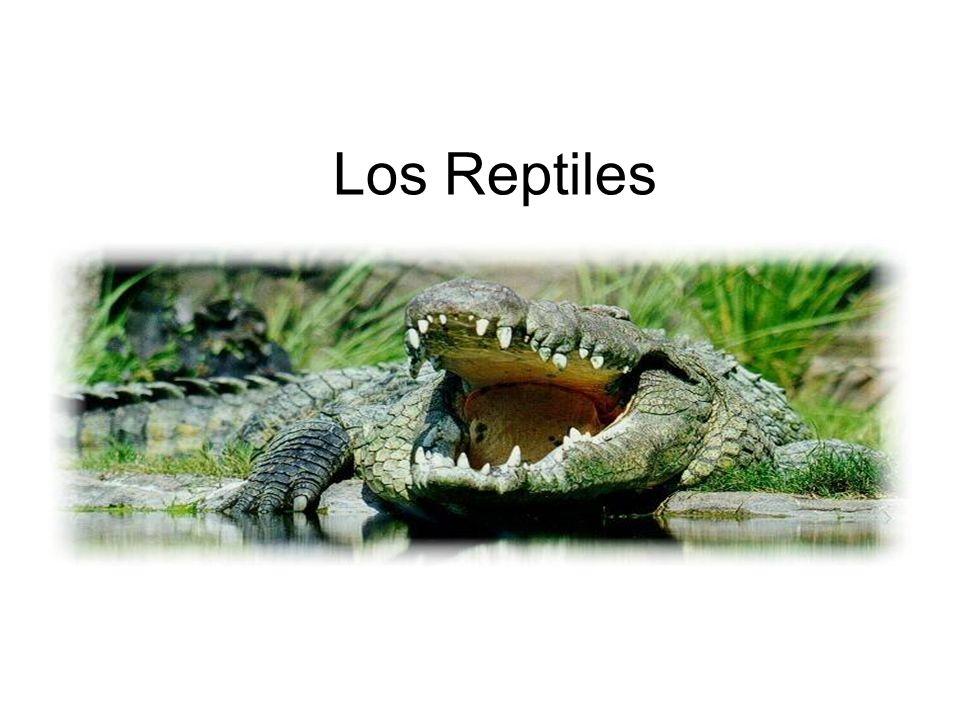 Los reptiles Los reptiles son animales vertebrados.