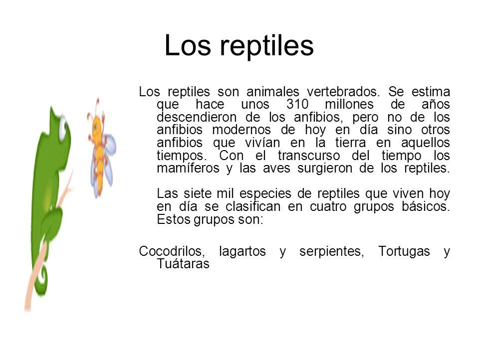 Los reptiles Los reptiles son animales vertebrados. Se estima que hace unos 310 millones de años descendieron de los anfibios, pero no de los anfibios