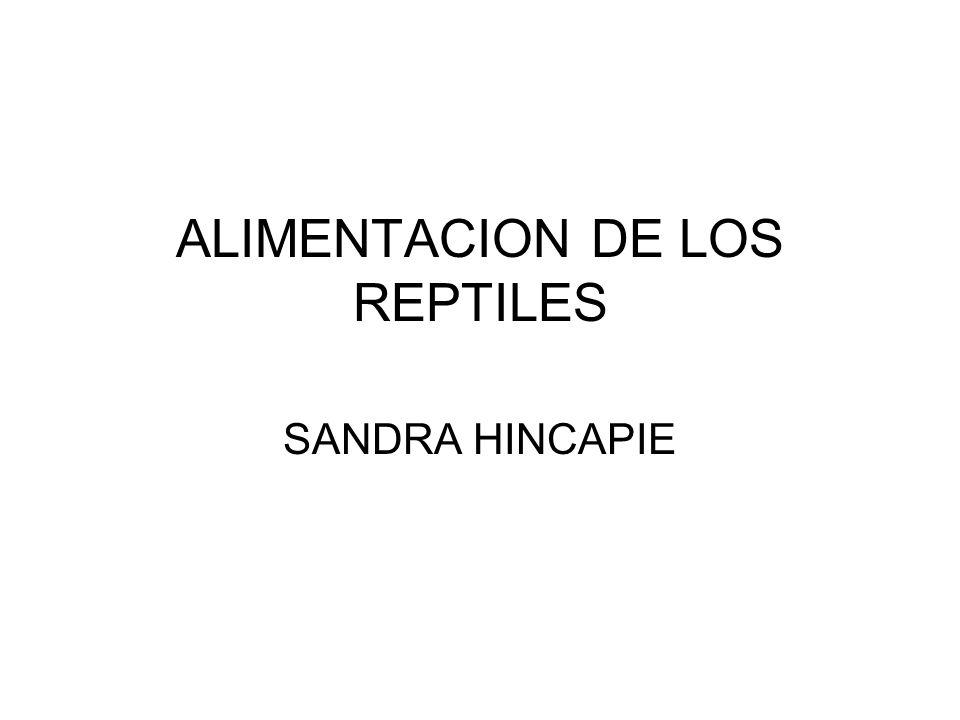 ALIMENTACION DE LOS REPTILES SANDRA HINCAPIE