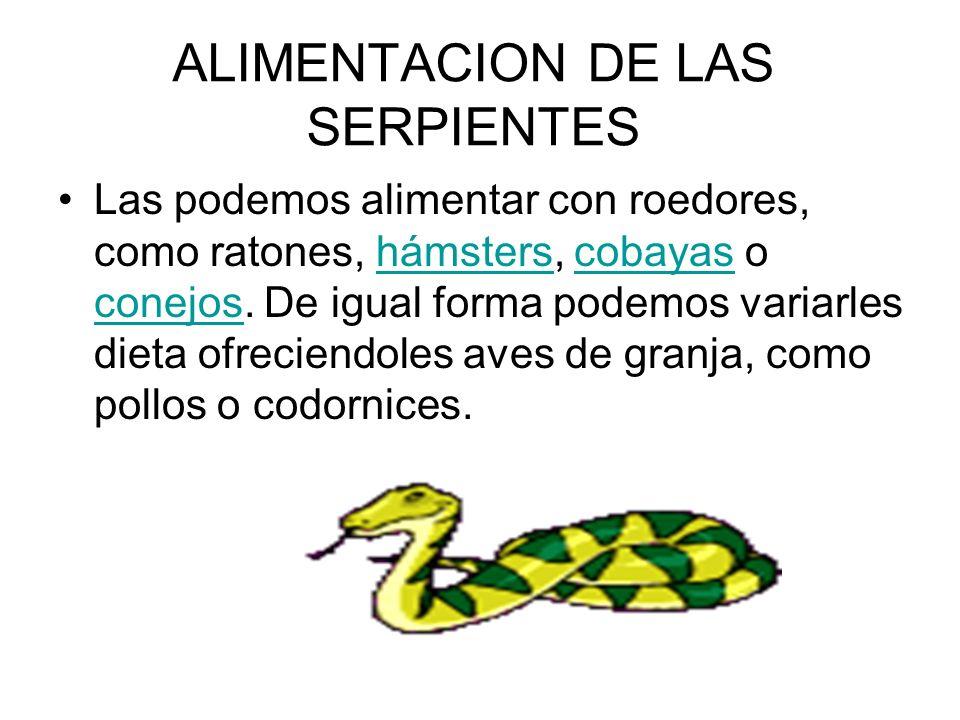ALIMENTACION DE LAS SERPIENTES Las podemos alimentar con roedores, como ratones, hámsters, cobayas o conejos. De igual forma podemos variarles dieta o