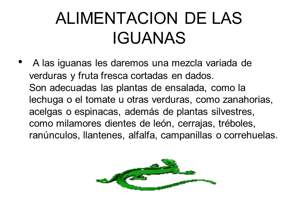 ALIMENTACION DE LAS IGUANAS A las iguanas les daremos una mezcla variada de verduras y fruta fresca cortadas en dados. Son adecuadas las plantas de en