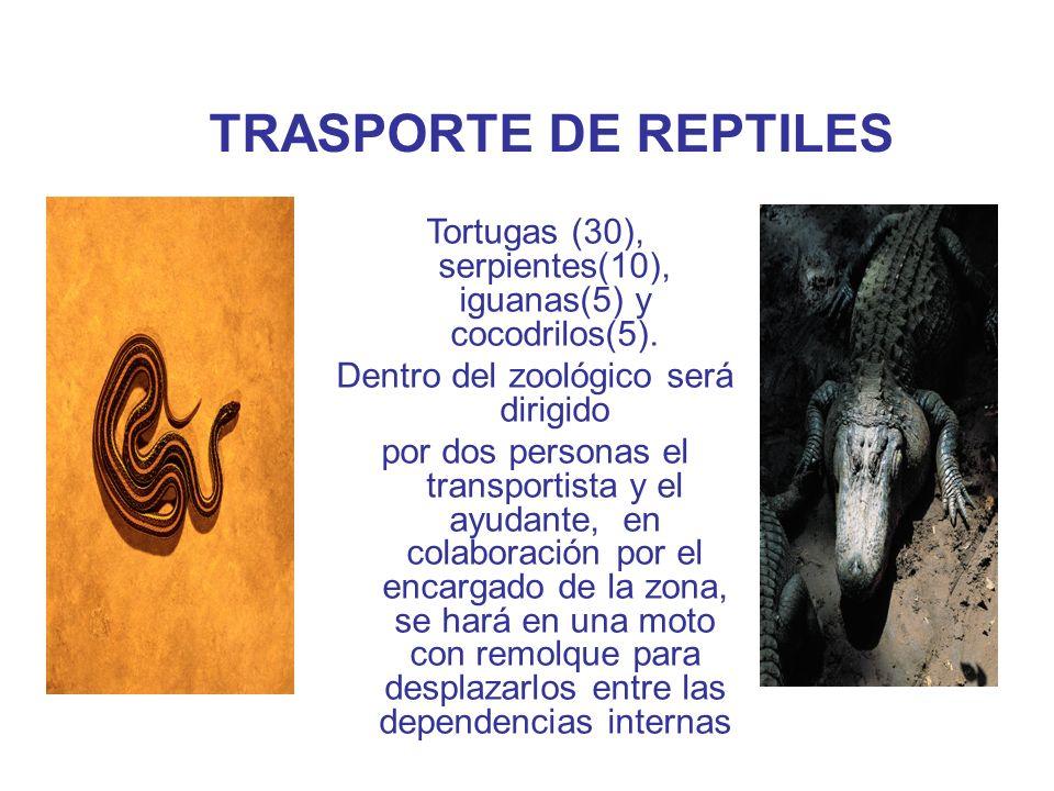 VETERINARIA DE REPTILES Juan Carlos Gómez Valencia