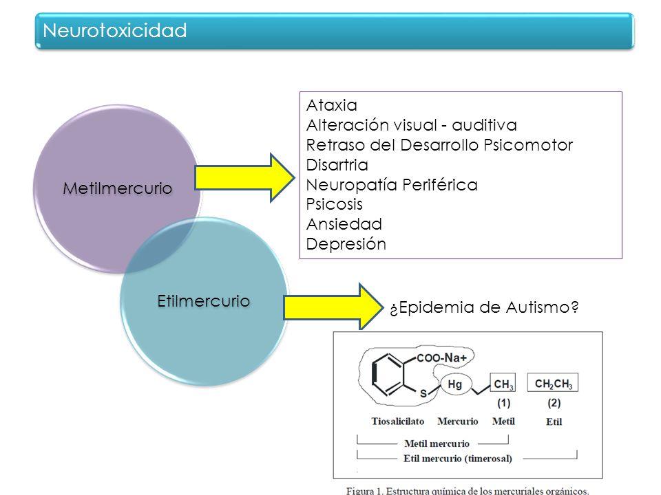 MetilmercurioEtilmercurio Neurotoxicidad Ataxia Alteración visual - auditiva Retraso del Desarrollo Psicomotor Disartria Neuropatía Periférica Psicosi