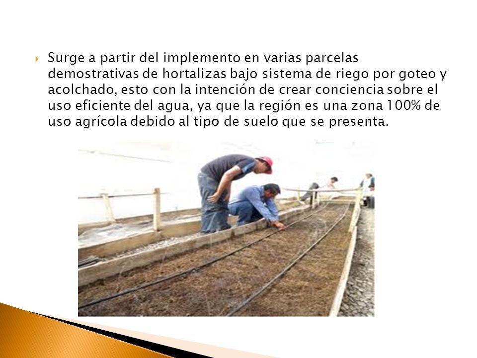Surge a partir del implemento en varias parcelas demostrativas de hortalizas bajo sistema de riego por goteo y acolchado, esto con la intención de cre