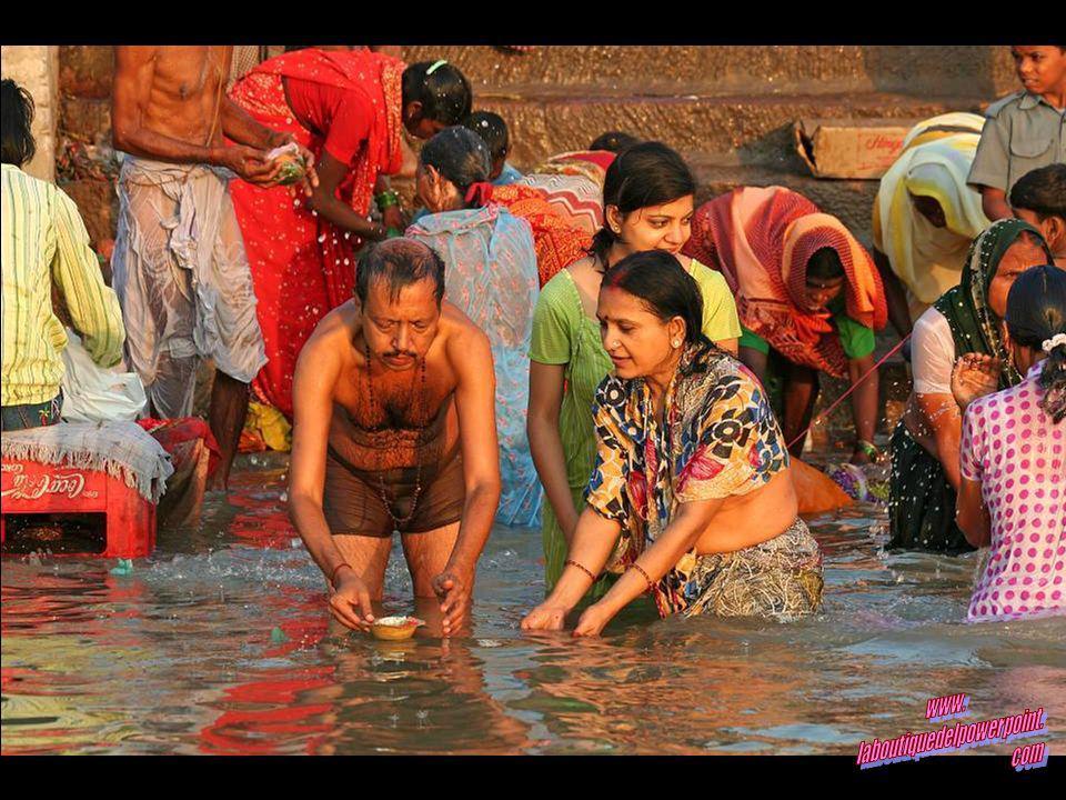 Hombre lavando búfalos en el Ganges