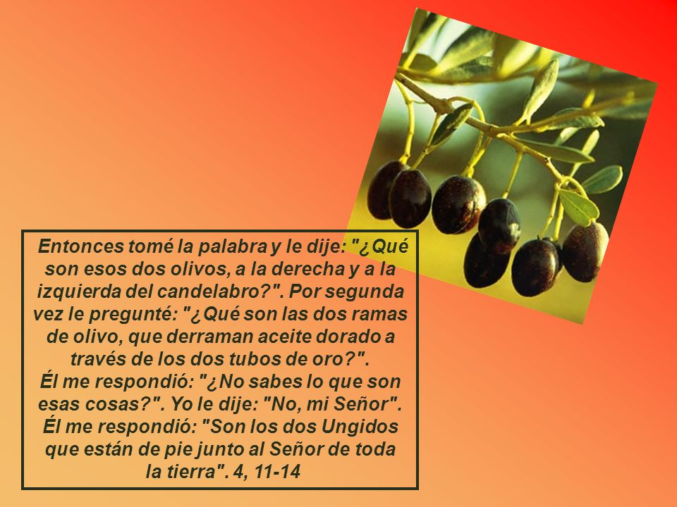 Cap. 4 QUINTA VISION: EL CANDELABRO Y LOS OLIVOS Él me preguntó: