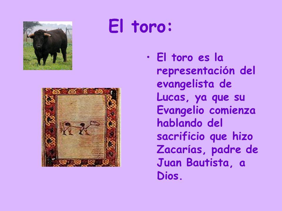 El toro: El toro es la representaci ó n del evangelista de Lucas, ya que su Evangelio comienza hablando del sacrificio que hizo Zacar í as, padre de J