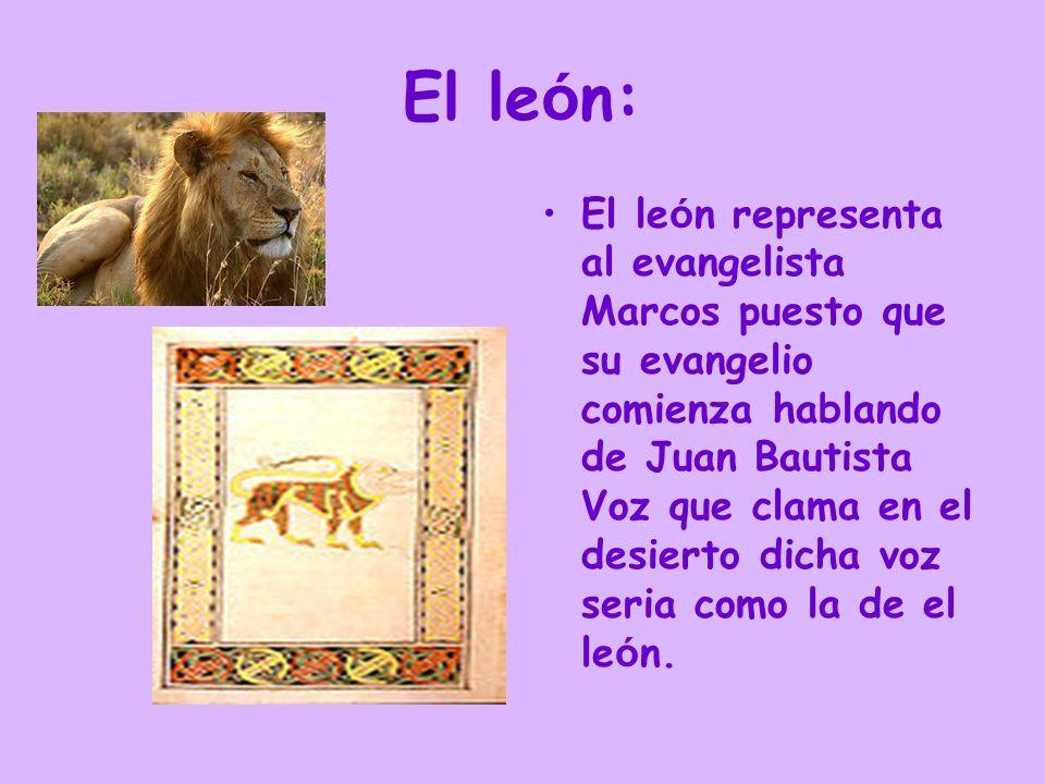El toro: El toro es la representaci ó n del evangelista de Lucas, ya que su Evangelio comienza hablando del sacrificio que hizo Zacar í as, padre de Juan Bautista, a Dios.