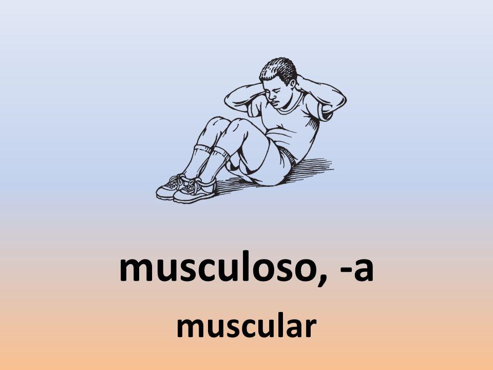 musculoso, -a muscular