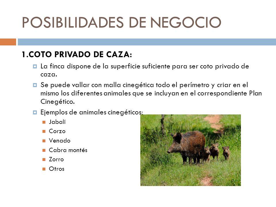 POSIBILIDADES DE NEGOCIO 1.COTO PRIVADO DE CAZA: La finca dispone de la superficie suficiente para ser coto privado de caza. Se puede vallar con malla