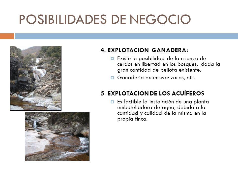 POSIBILIDADES DE NEGOCIO 4. EXPLOTACION GANADERA: Existe la posibilidad de la crianza de cerdos en libertad en los bosques, dada la gran cantidad de b