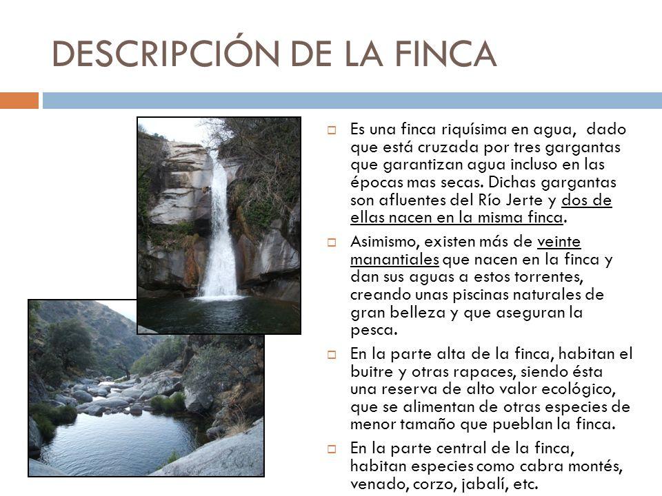 DESCRIPCIÓN DE LA FINCA Es una finca riquísima en agua, dado que está cruzada por tres gargantas que garantizan agua incluso en las épocas mas secas.