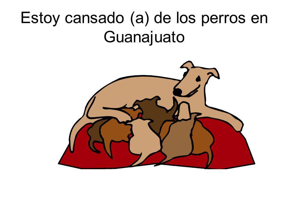 Estoy cansado (a) de los perros en Guanajuato